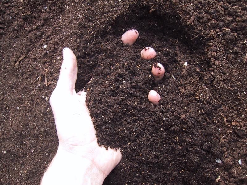 top soil small