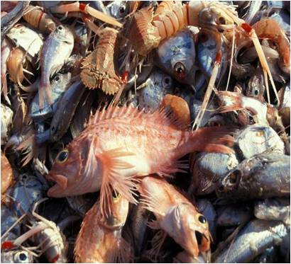 Dom Post: Fishing limit decisions 'guesswork'