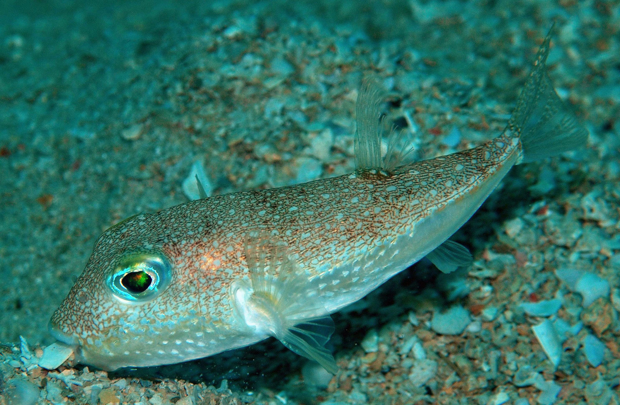 Science media centre blog archive top 10 new species for New fish discovered