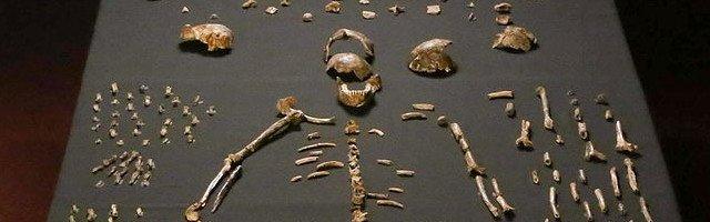 Homo_naledi_skeletal_specimens CC Lee Roger Berger