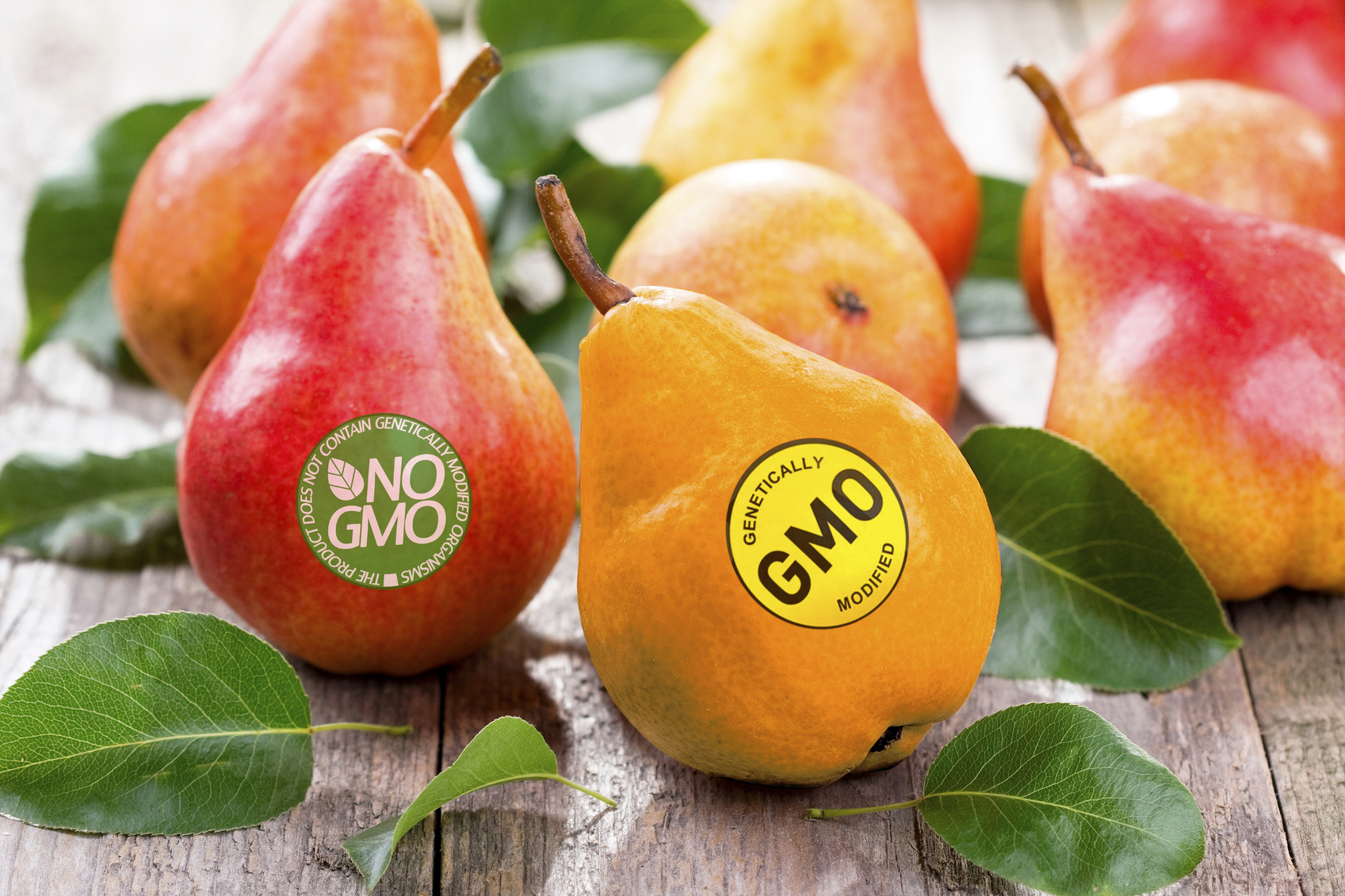 EU court rules GMO laws apply to gene-edited plants – Expert Reaction