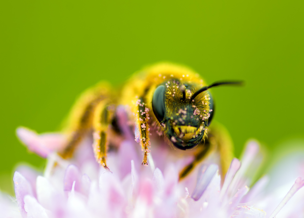 European Commission votes to restrict neonicotinoids – Expert reaction