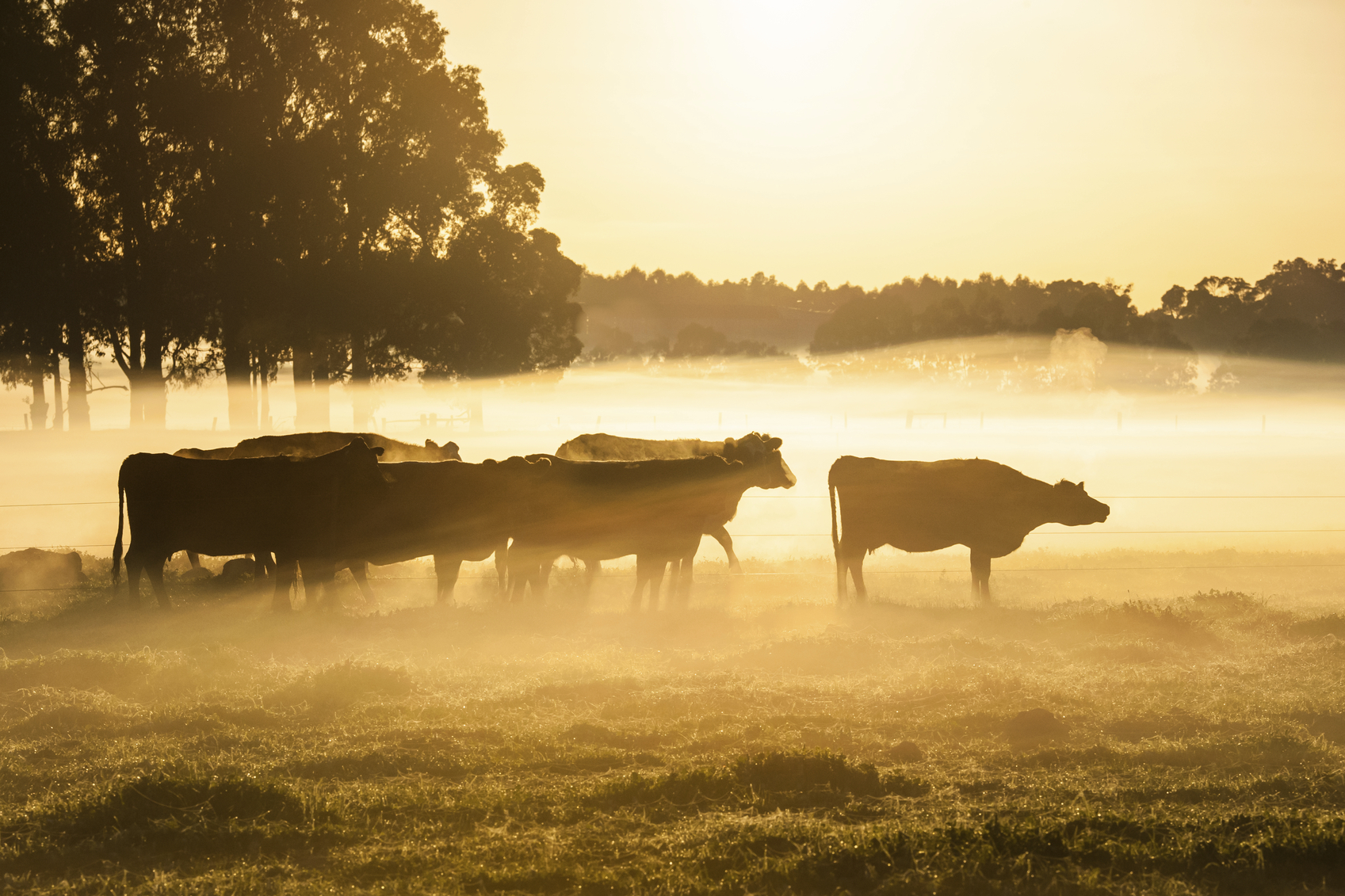 Bacterial cow disease found in NZ for first time — In The News