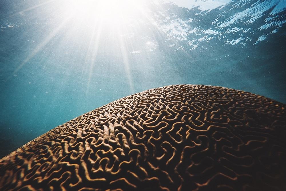Hotter, longer marine heatwaves over past century – Expert Reaction