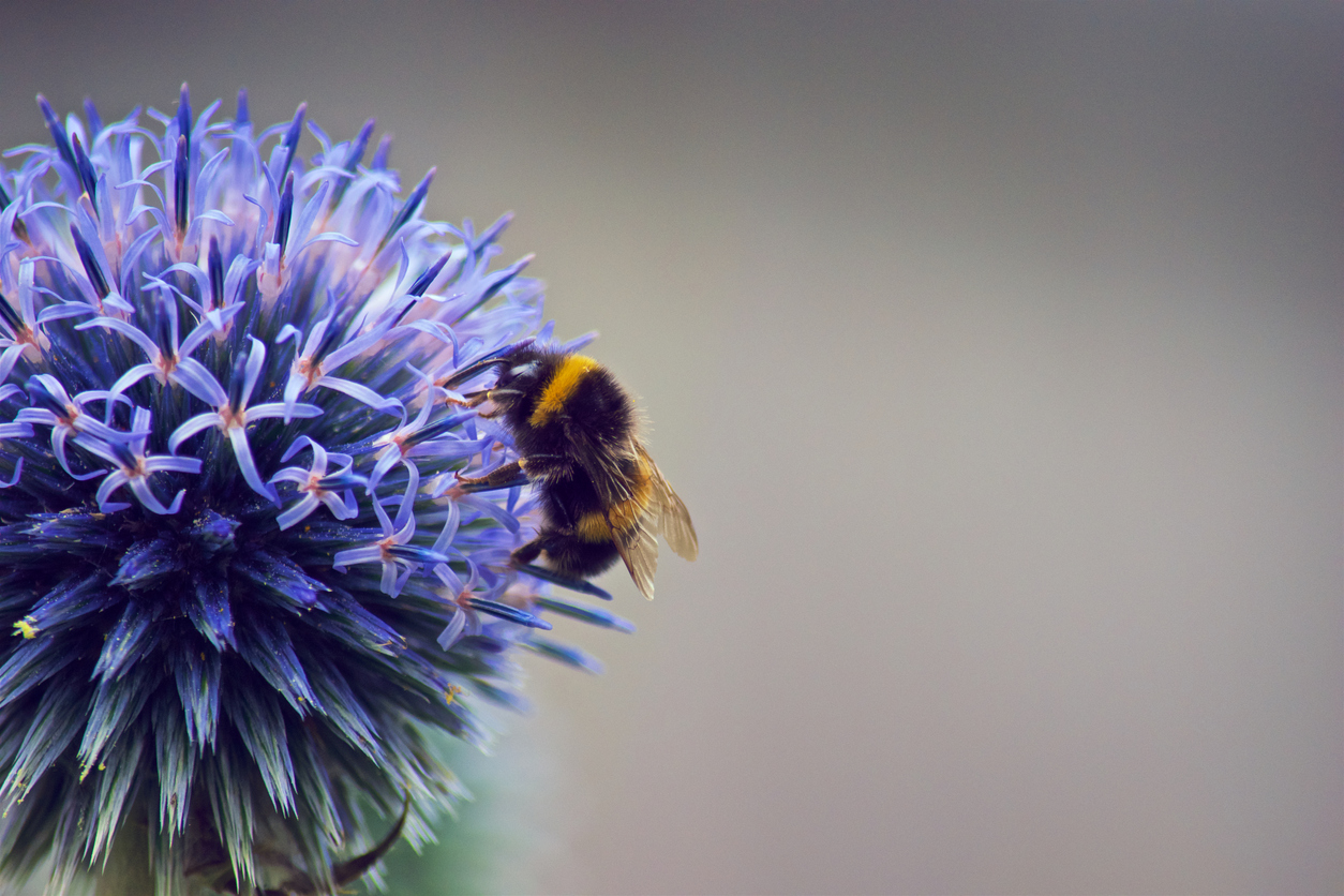 Neonicotinoid replacement hinders bumblebee reproduction – Expert Reaction