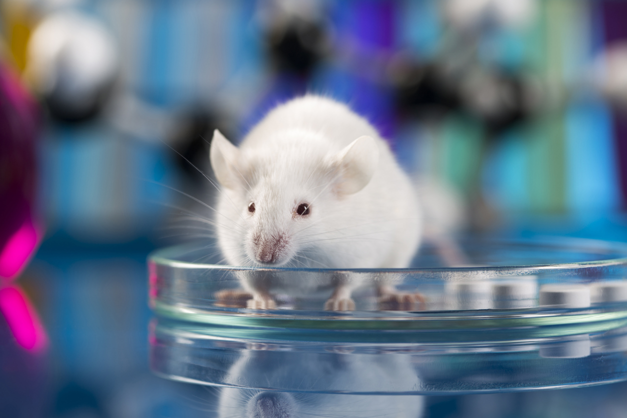 Gene drive tested in mice – Expert Reaction