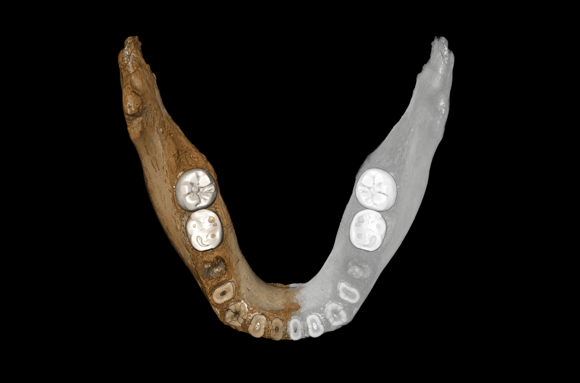 Denisovan jawbone discovery – Expert Reaction