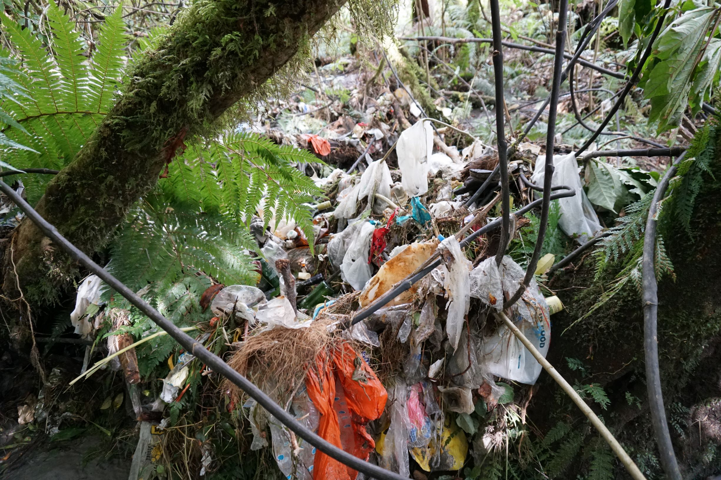 Report on dealing with plastics – Expert Reaction