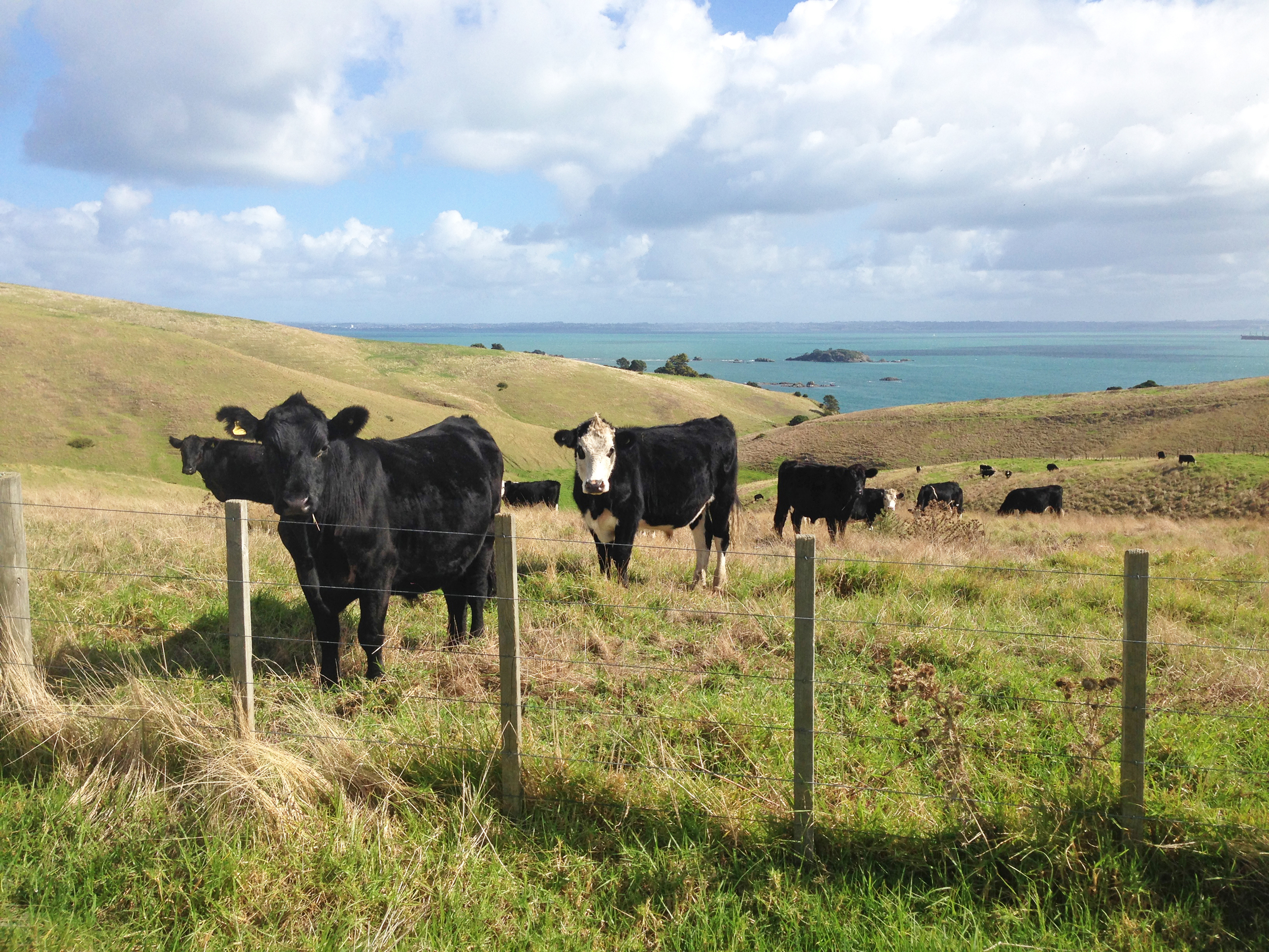 Agricultural emissions agreement – Expert Reaction