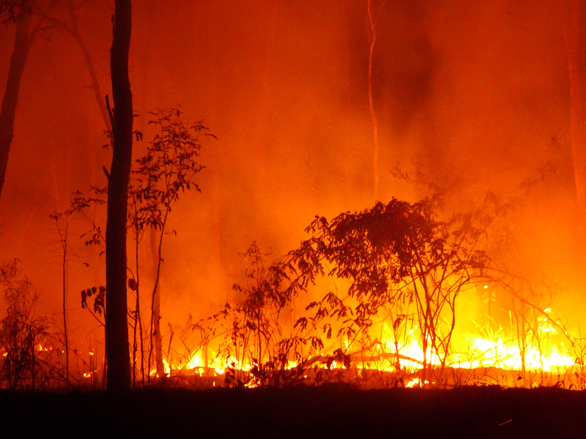 Bushfires rage along Australia's East Coast – Expert Reaction