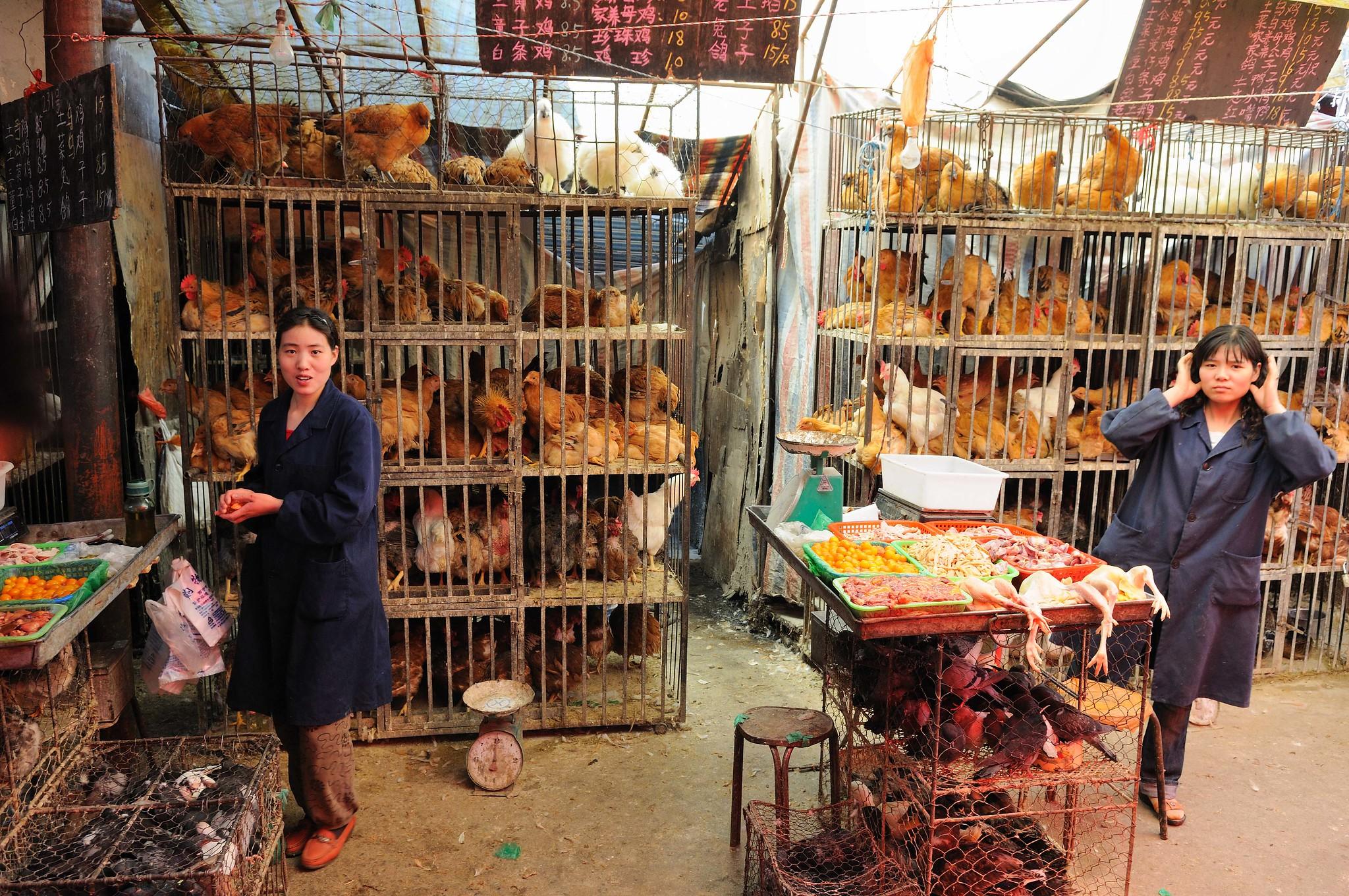 Bird flu spreads via live markets – Expert Reaction