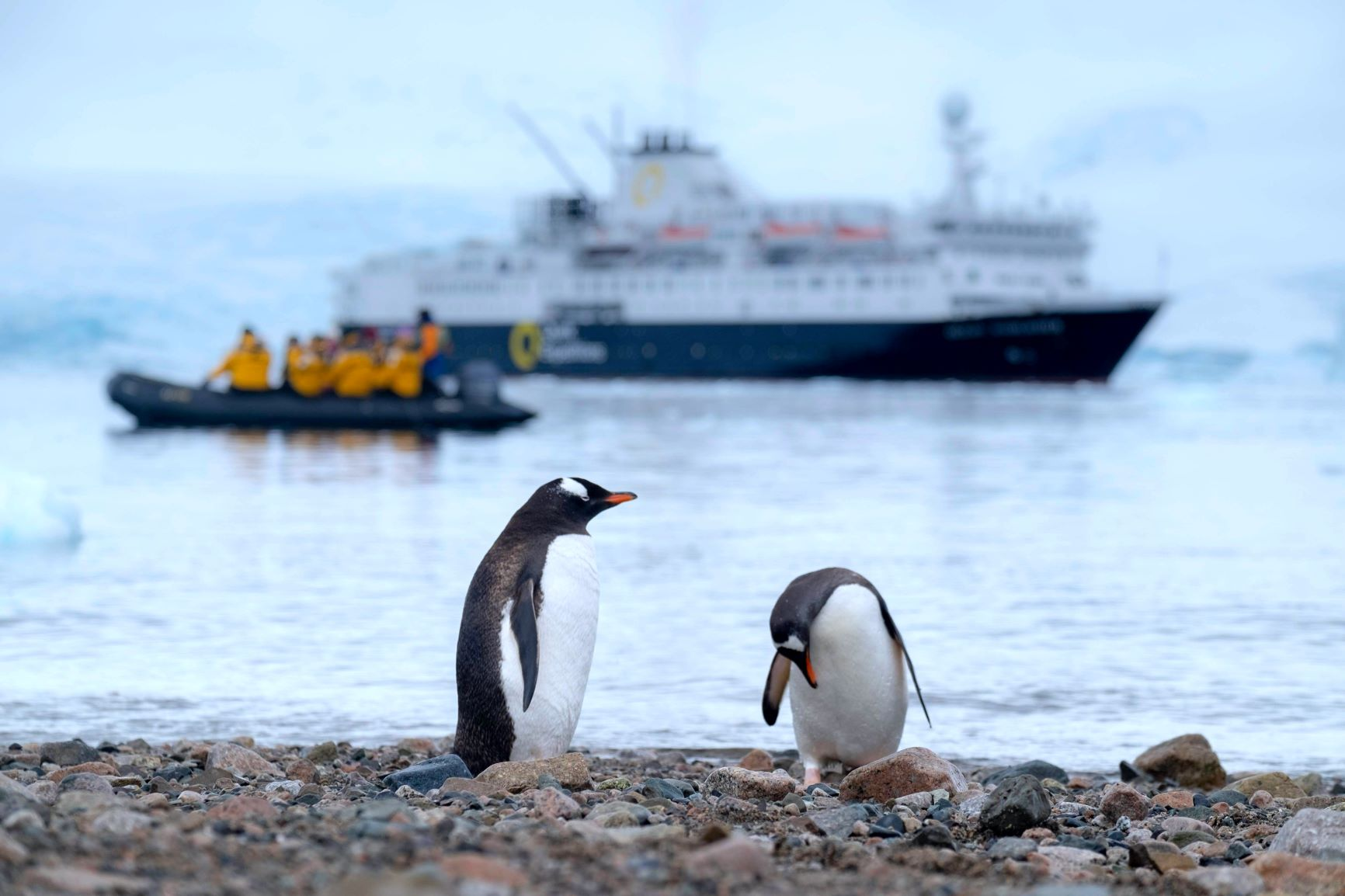Antarctic science shrunk for COVID-19 – Expert Reaction