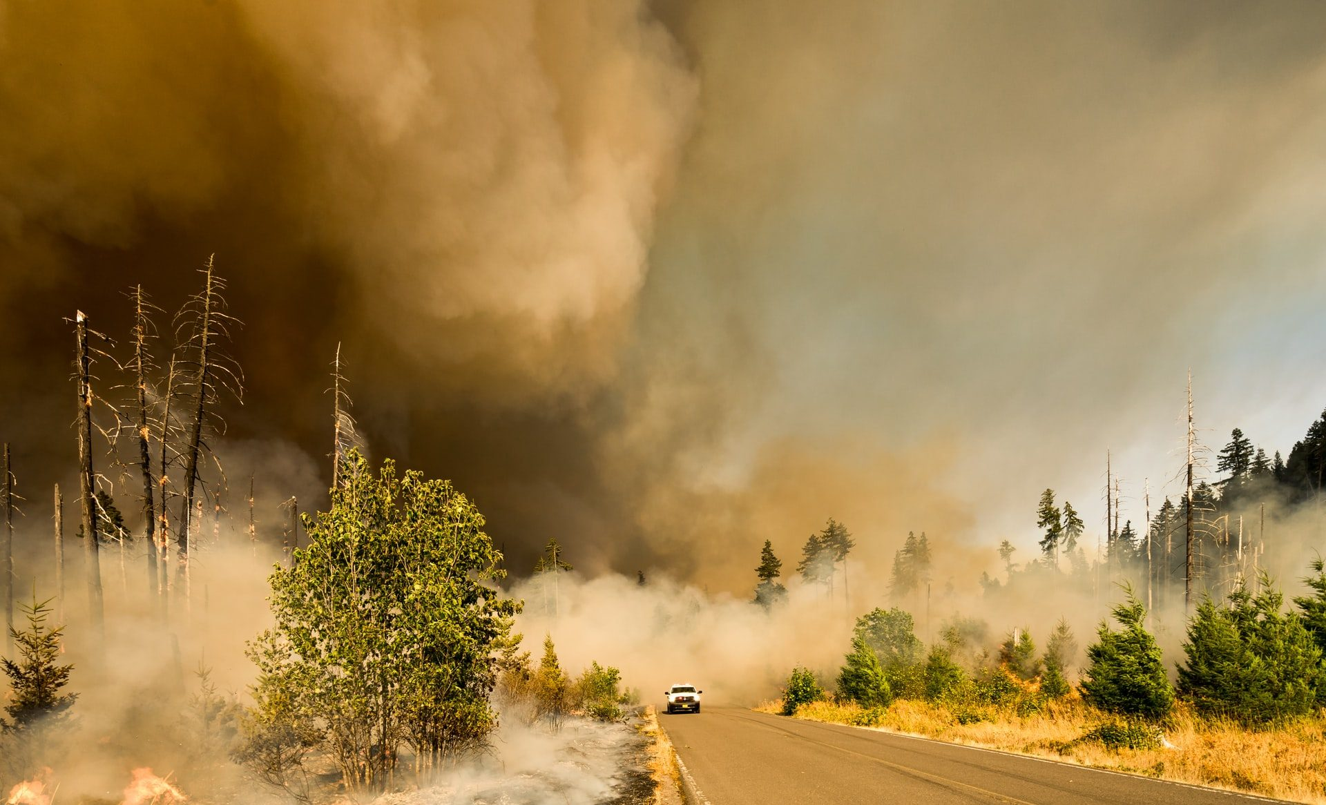 Could wildfire smoke spread infectious diseases?